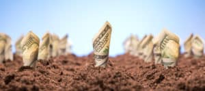close up of curled up $100 bills planted in dirt