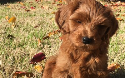 How Raising a Puppy is Like Branding